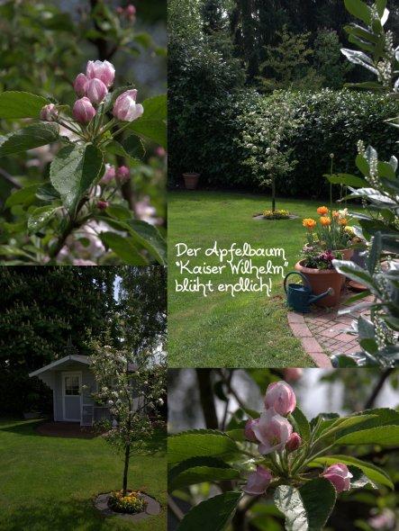 Garten '❀FrühJAAAAA❀'