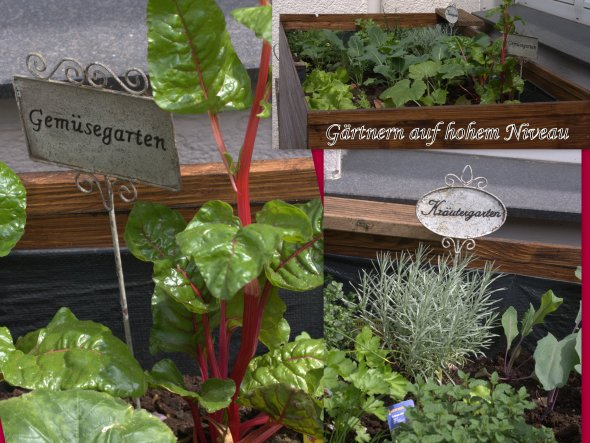 Mai 2013: Tattaah! Gärtnern auf hohem Niveau!! Im Hochbeet gedeihen: Kohlrabi, Mangold, Mohrrüben, Radieschen, zwei Sorten Salat,