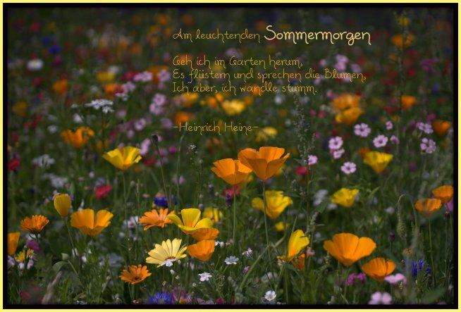 es wurde in unseren Dorf hier und da Wildblumensamen ausgestreut, so dass überall herrlich ♥ bunte ♥ Blütenteppiche entstanden sind!
