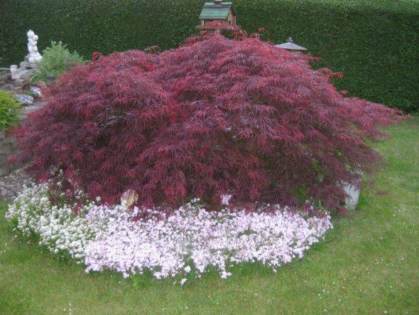 Garten 'Garten 2010'