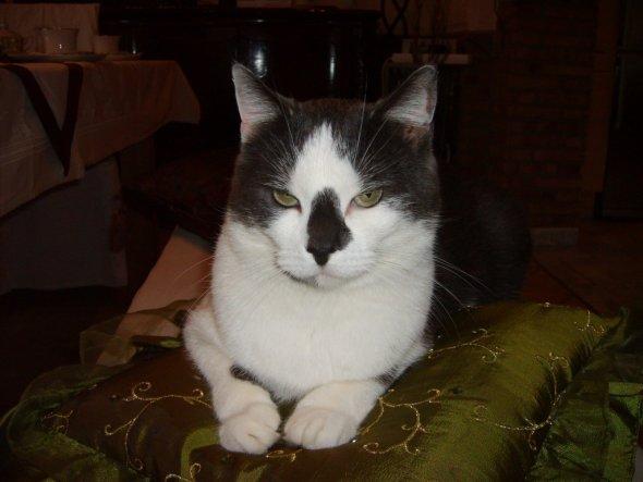 Haustiere 'Unsere Katze'