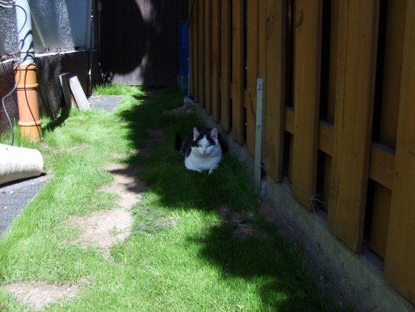 Haustiere 'Unsere Katzen'