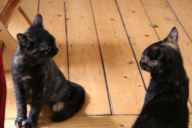 Links Pippa, rechts Schwester Polly