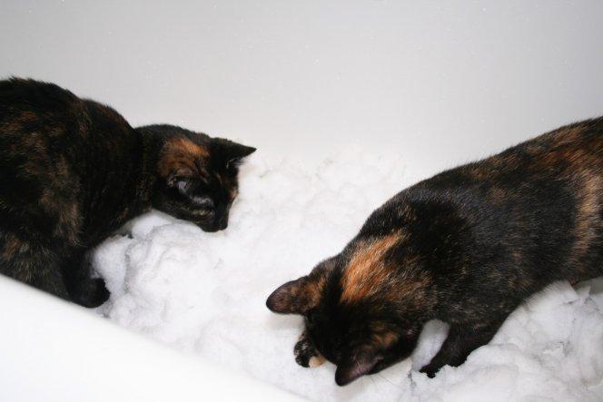 Haustiere 'Polly und Pippa'