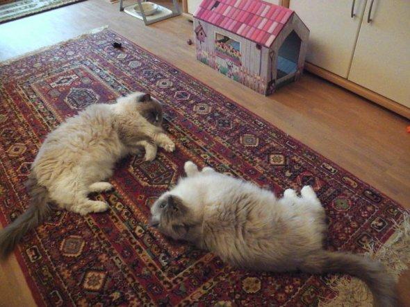Mia (5 J.) und Berry (13 J.) verstehen sich schon gut!