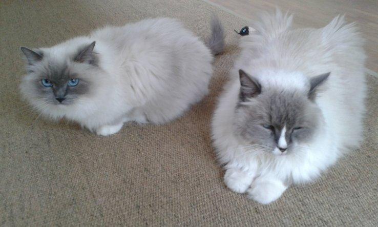 Haustiere 'Meine Cats'