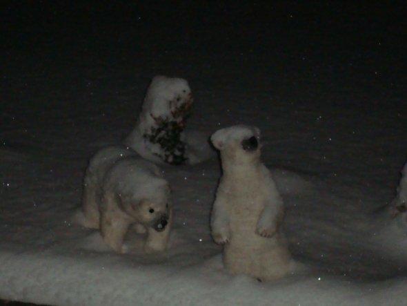 Unsere neuen Bewohner.... die Eisbären sind los...