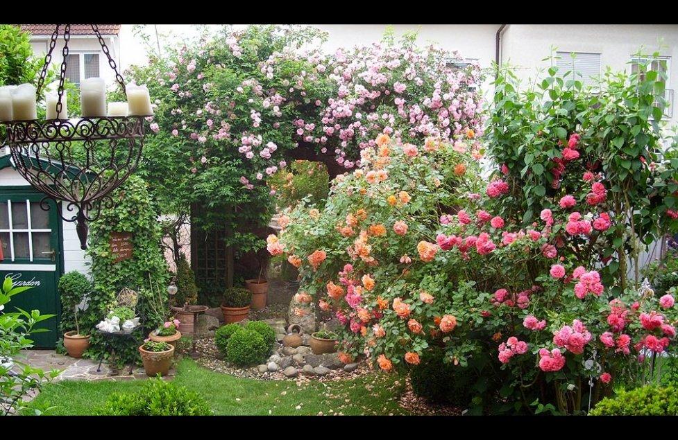 Unser Garten von klausundute1