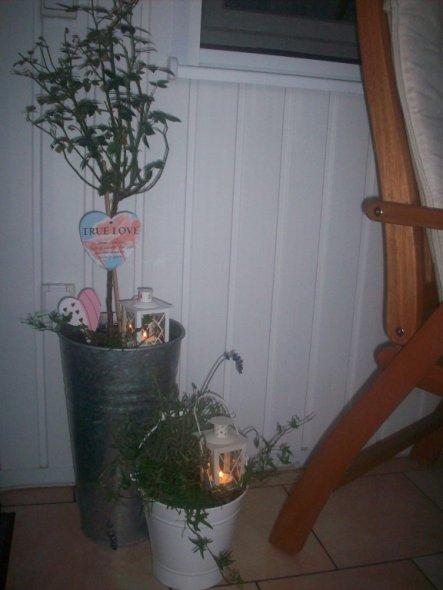 die Rose blüht in einem sehr schönen Altlila ton, hab ich von meinen Söhnen zum Muttertag bekommen, ich hoffe sie blüht bald wieder
