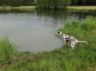 Flug-Hund