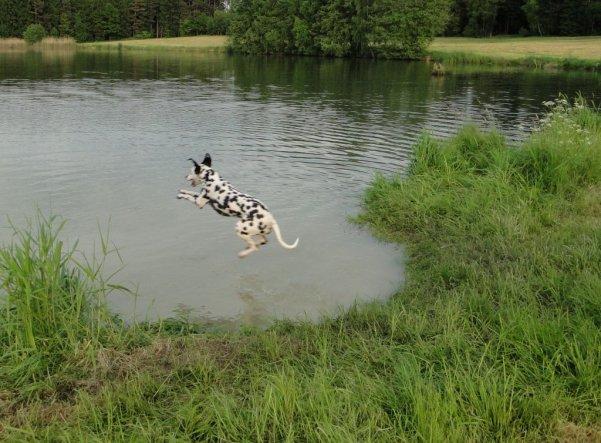 Haustiere 'Flug-Hund'