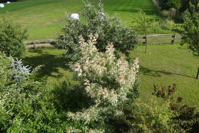 Garten 'Gartenreich'