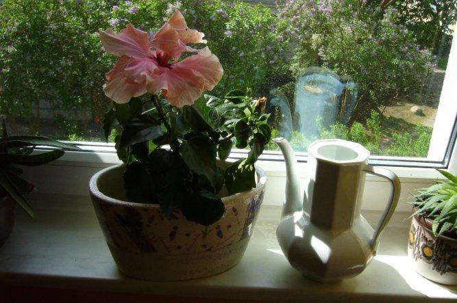tipp von belawito pflanzen wasser kanne zimmerschau. Black Bedroom Furniture Sets. Home Design Ideas
