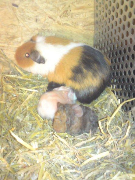Haustiere 'Mein kleiner Zoo'