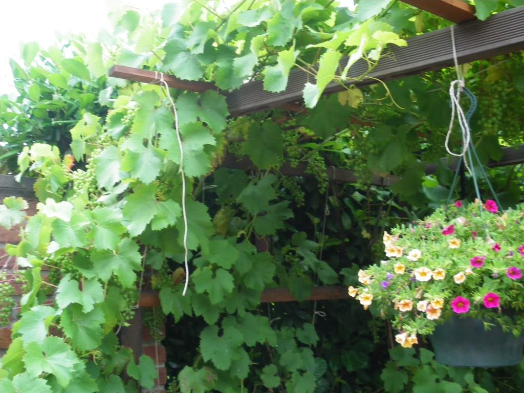 Garten 39 garten eden 39 garten zimmerschau for Garten eden