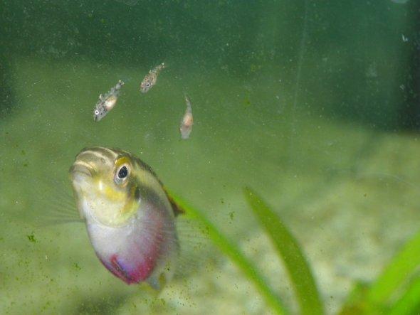 Nachwuchs bei meinen Sohn im Aquarium