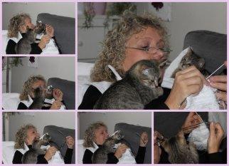Haustiere 'tierische hausgenossen'