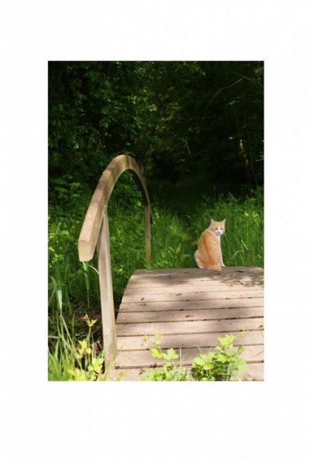 Garfield in seinem Revier.
