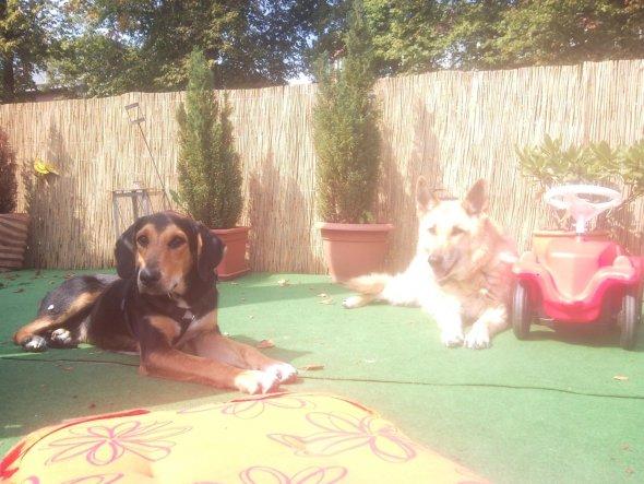 Unser neues Familienmitglied.Ben links und unsere alte Dame Nala rechts