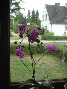 Orchideen/ Handarbeiten