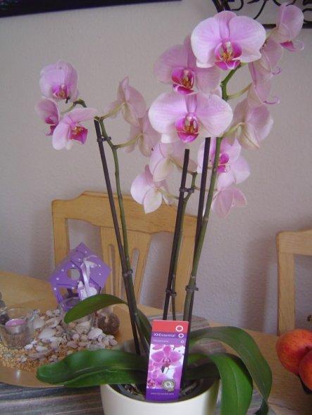 Hobbyraum 'Orchideen/ Handarbeiten'