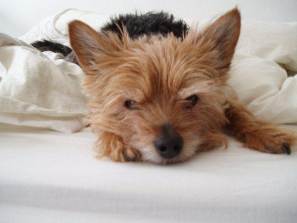 Haustiere 'Mein Hund Hase'