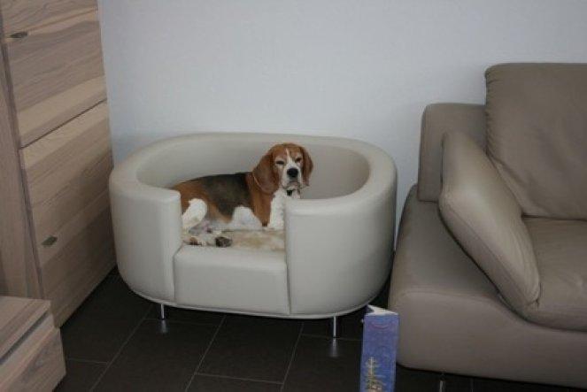 Mein kleiner, süsser, verschmuster Beagle hat ein super tolles Weihnachtsgeschenk bekommen