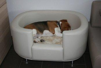 Mein süsses Beaglemonster