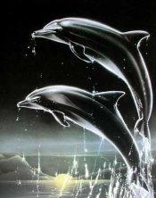 Delfinchen