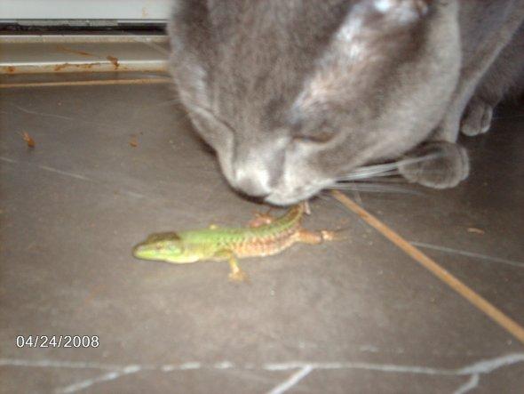 Haustiere 'Walter; Alfred und Hund'