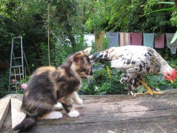 Haustiere 'andere Tiergeschichten'