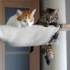 Haustiere 'Ruby&Loui unsere Stubentiger'