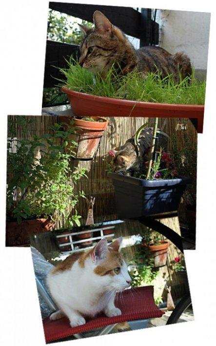 Katzen auf dem Balkon