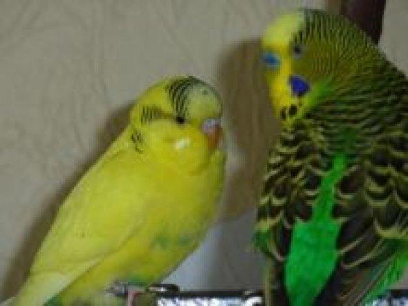 Fridolin und Piti