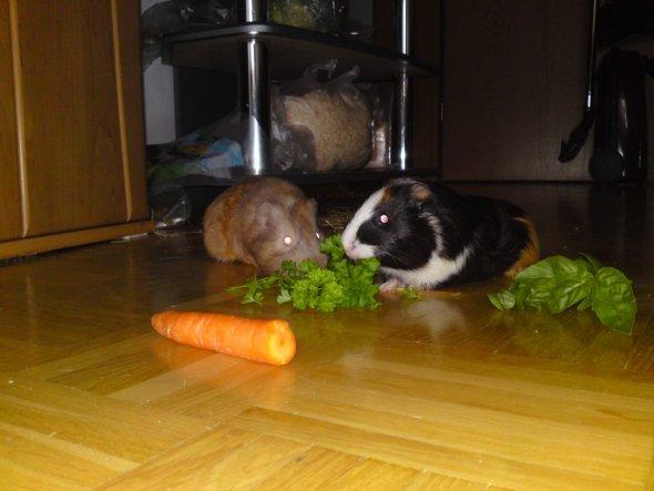 Haustiere 'Meine Pupsis'