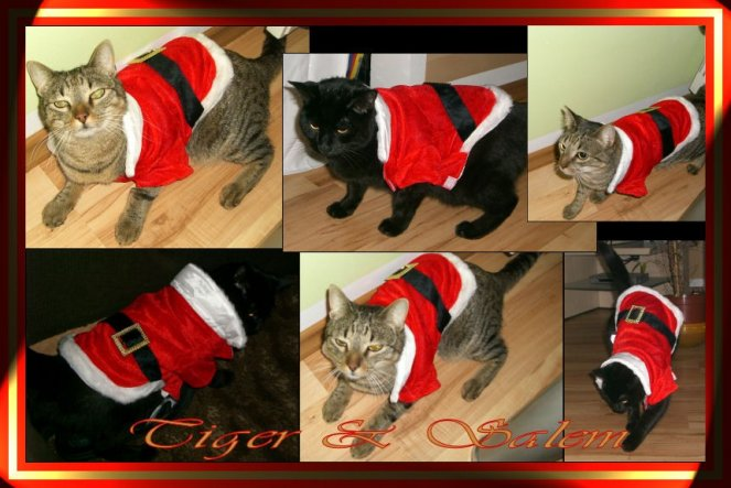 So meine katzen sind dann mal auf weihnachten eingestimmt :D