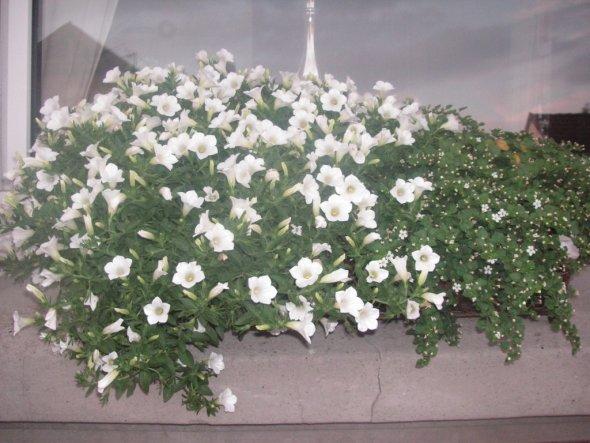Garten 'Meine Blumen'
