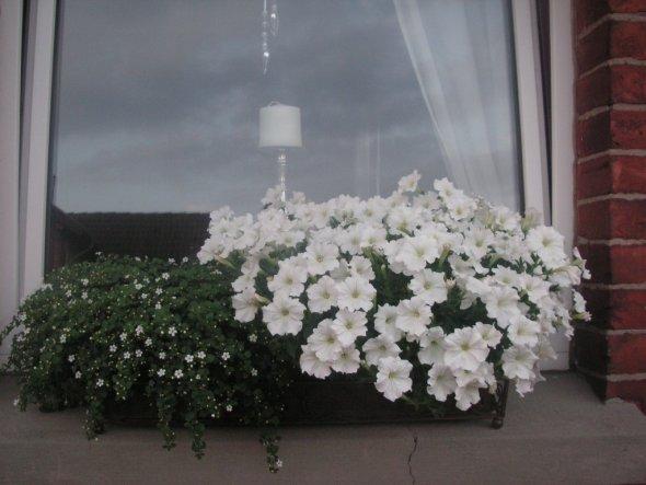 Blumenkasten vor unseren Wohnzimmerfenstern.