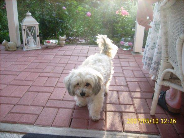 """Felix, """"der Glückliche"""", Hund meiner Mutter, war auch unter den Gästen...;-)"""