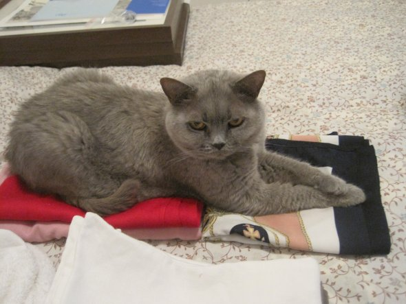 Pauli hilft mir beim Bügeln - gestern Abend...