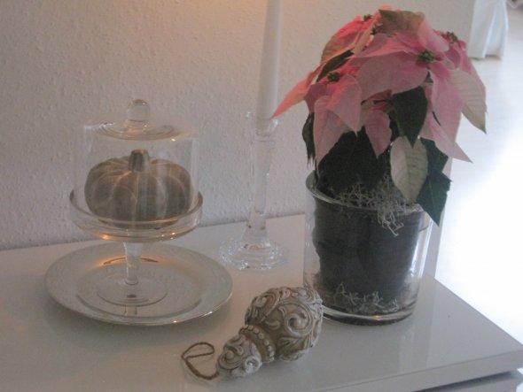 Weihnachtsstern in rosé - Mal was Anderes...;-). Viele liebe Grüße und einen schönen 8. November wünsche ich Euch!