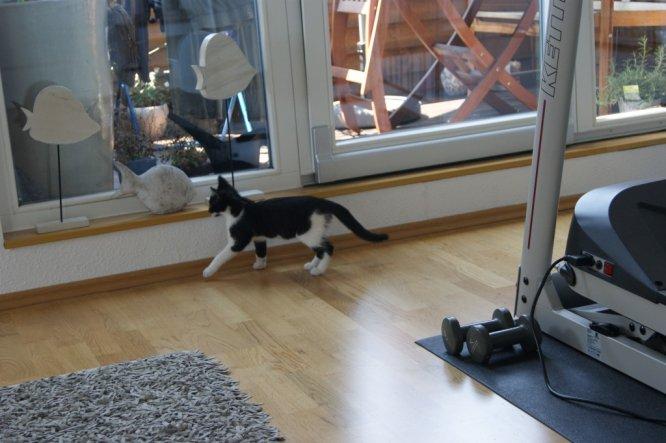 Haustiere 'Mitbewohner auf Zeit'