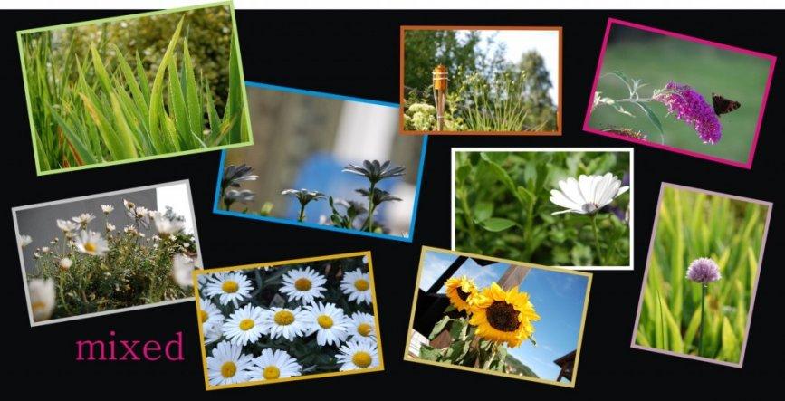 Garten 'NATUR-Schnappschüsse'