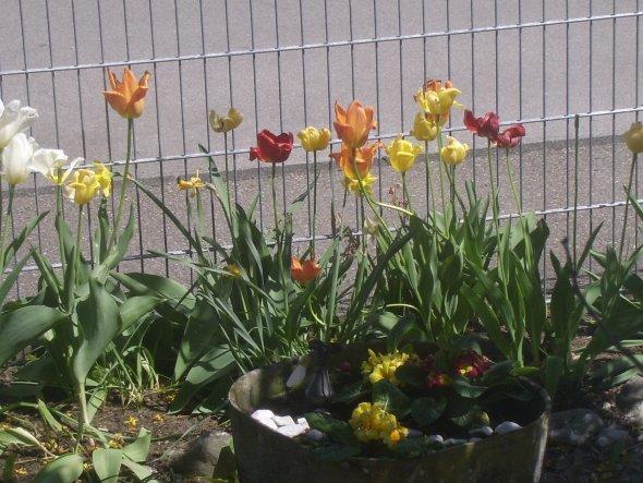 Garten 'Blumen'