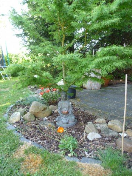 Noch mal ein wenig japan - die Tanne ist zwar eine Lerche und verliert über Winter ihre Nadeln, aber im Sommer hab ich sie schon ganz gut auf Bonsai g