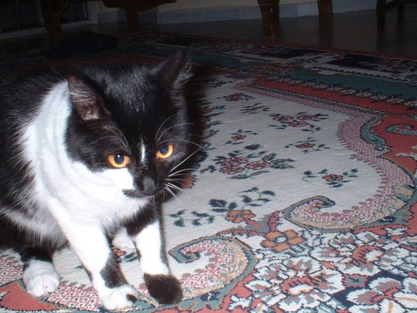 Leyla 8 Monate - das Fell wird langsam laenger