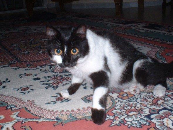 Leyla 8 Monate
