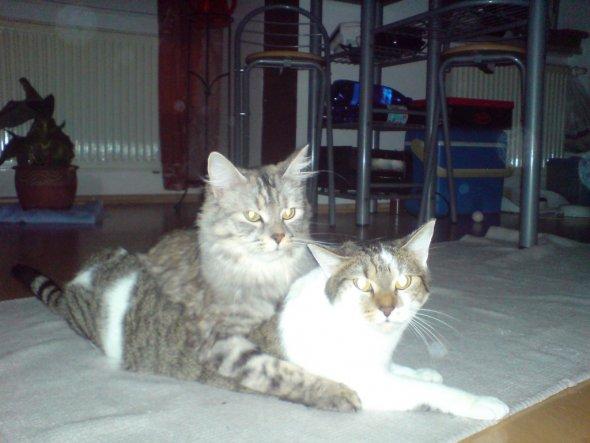 Haustiere 'Meine Katzen'