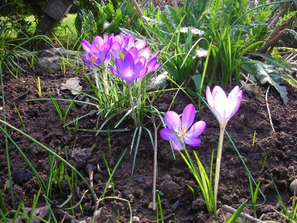 Garten 'Garten hinterm Haus'