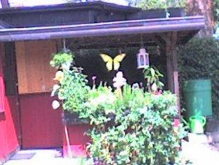 Garten 'Hacienda'